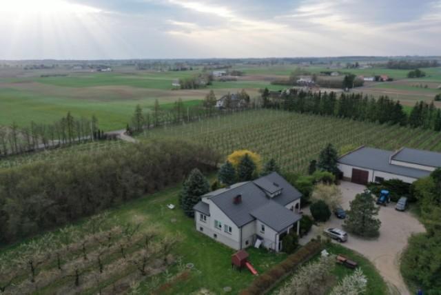 Część gospodarstwa Andrzeja i Macieja Grochowalskich, którzy sprzedają jabłka, gruszki i czereśnie