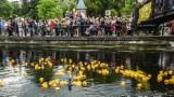 Ekscytujący wyścig kaczek w ramach imprezy Ster na Bydgoszcz [zdjęcia]