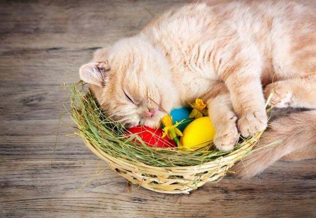 Piękne życzenia wielkanocne: Życzenia na Wielkanoc 2021 - krótkie, śmieszne, zabawne, poważne [WIERSZYKI, ŁAŃCUSZKI SMS]