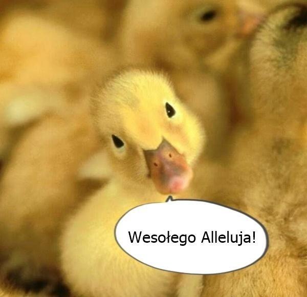 Memy na Wielkanoc 2021 w czasach kornawirusa i kwarantanny. Zobacz najlepsze wielkanocne MEMY [4.04.2021]