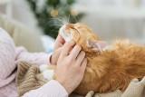 Te koty nie linieją! Urocze kotki, które nie gubią sierści. Te rasy kotów nie zostawiają sierści gdzie popadnie [28.05.2021]