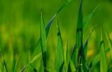 Podatek rolny 2021. Zbliża się termin płatności pierwszej raty. Stawki w Kujawsko-Pomorskich gminach