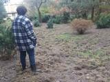Stado dzików żeruje w pobliżu al. Włókniarzy. Zryły już kilka tysięcy metrów kwadratowych