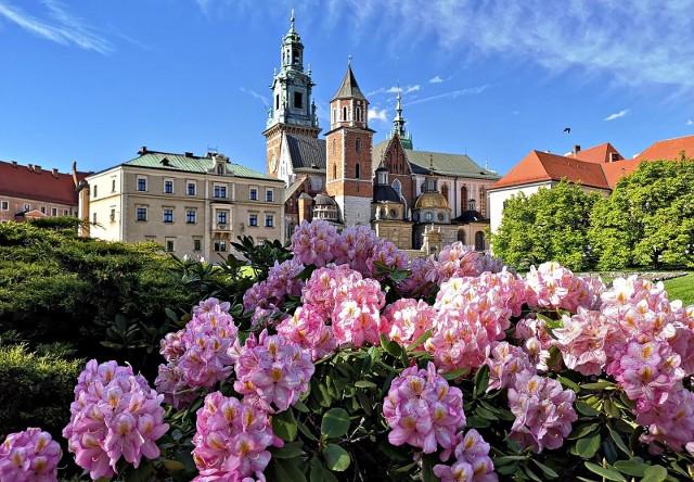 Tak wygląda Wawel pod koniec maja 2021