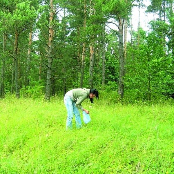 Kleszcze najczęściej występują na obrzeżach lasu, ale nie wszyscy ludzie zwracają na to uwagę.