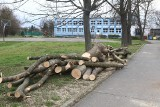 W szkole na Różance trwa wycinka drzew. Co się dzieje?