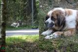 Szulborze Wielkie. Ktoś wyrzucił psa przy drodze...