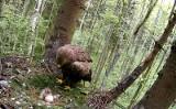 Orlik krzykliwy wysiaduje jaja i karmi pisklę. Zobacz film z gniazda