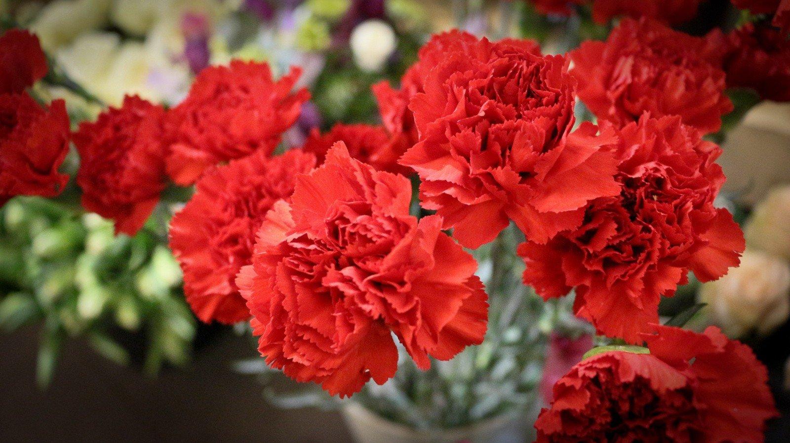 życzenia Na Dzień Kobiet Najpiękniejsze Wierszyki Na Dzień