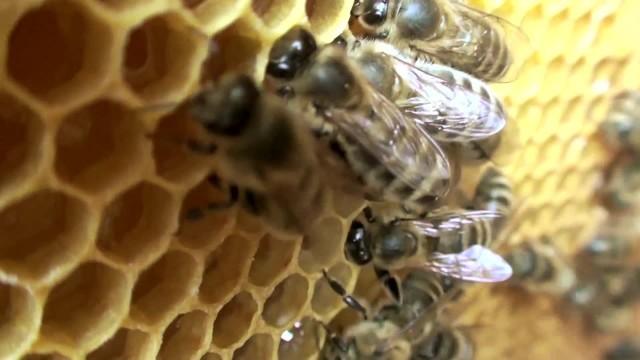Co Nam Dają Pszczoły Co Stałoby Się Gdyby Ich Zabrakło