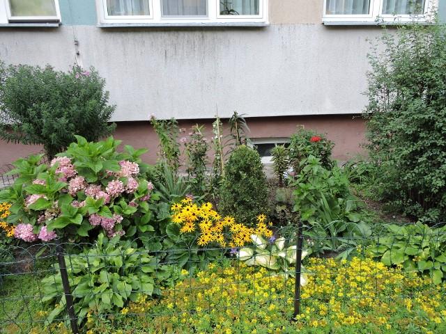 """Ostrołęka. Masz balkon pełen kwiatów lub piękny ogród? Zgłoś go do konkursu """"Miejsce przyjazne pszczołom w mieście Ostrołęka w 2019 roku"""""""