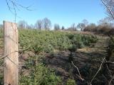 Dopłaty do zalesiania 2021. ARiMR będzie zachęcać rolników do sadzenia lasu na słabej ziemi