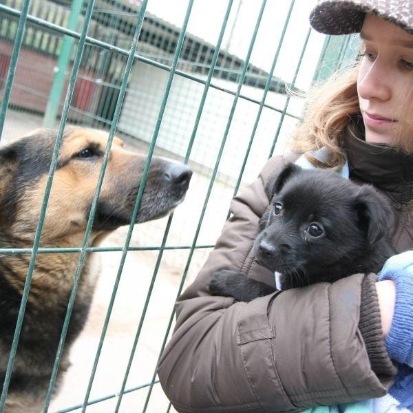 Jedna z wolontariuszek, Adela Radziwońska, razem z mamą co tydzień przychodzi do schroniska, żeby zajmować się psami. W sobotę prezentowała gościom kilkutygodniową suczkę, przeznaczoną do adopcji. Maleństwo znalazło dom.