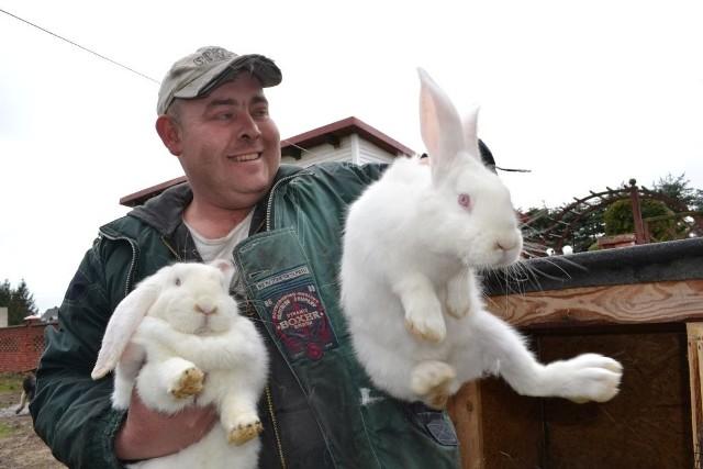 Andrzej Rajnik spod Grudziądza hoduje króliki: - Prawdziwe jest powiedzenie mnożyć się jak króliki