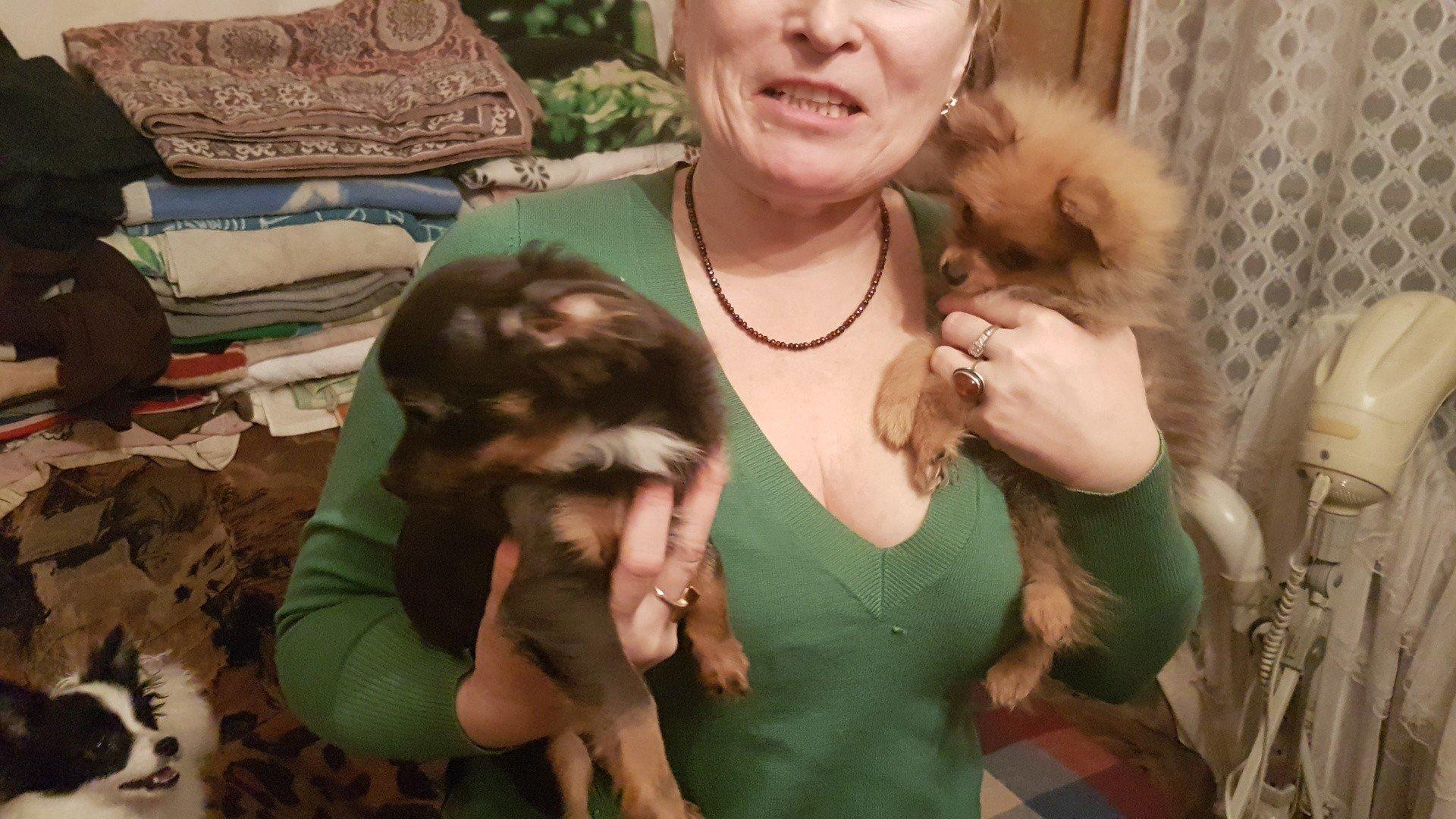 Ogromny Nielegalna hodowla psów w Łodzi. Trzymają psy w bloku na SI51
