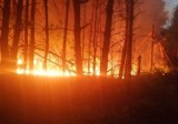 Pożar lasu w gminie Słupia Konecka [ZDJĘCIA]