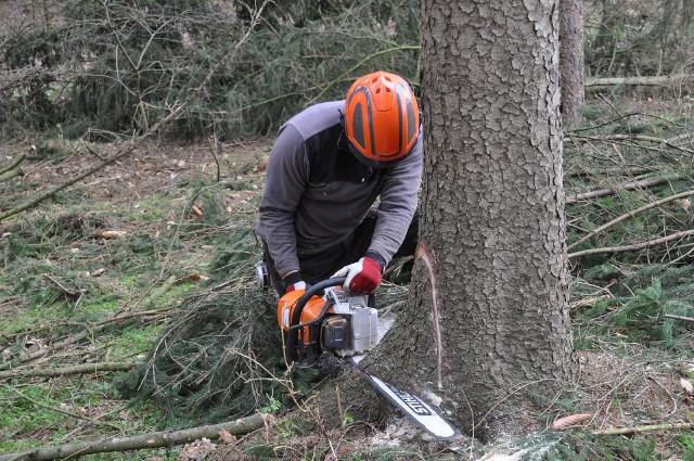 """Wycinanie drzew i ich sprzedaż to wprawdzie dobry sposób i często szybki sposób na zapełnienie portfela, ale też pozbywanie się drzew wzbudza negatywne emocje mieszkańców, którzy nie chcą mieszkać w """"betonowych pustyniach"""""""