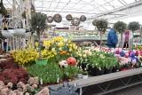 Ogrody Kapias na wiosnę przyciągają cudownymi kolorami. Centrum Ogrodnicze dziś jest czynne