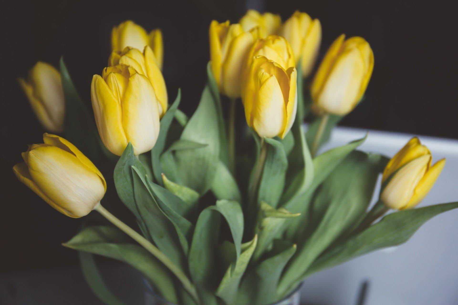 Życzenia imieninowe dla Jolanty [15 czerwca]. Na imieniny Jolanty, Joli, Jolki złóż jej życzenia. Wierszyki imieninowe, sms   Kurier Lubelski