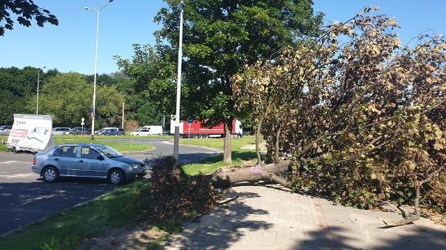 Drzewo leżało na ul. Strykowskiej od miesiąca