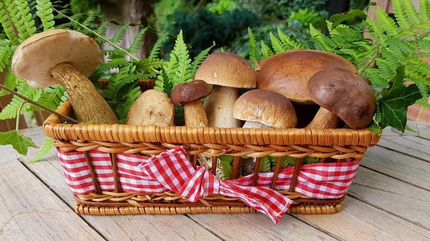 W lasach pojawiło się sporo grzybów. A może być ich jeszcze...