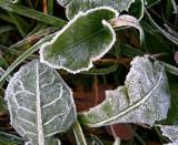 Czy przyjdą zimni ogrodnicy? Kiedy będzie ciepło?