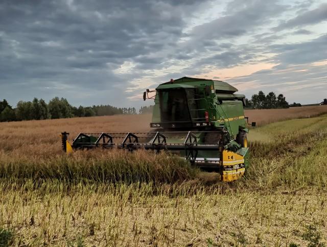 Drugi, upalny weekend sierpnia pozwolił wielu rolnikom dokończyć rozpoczęte w lipcu żniwa. Do skupów ustawiają się kolejki gospodarzy, którzy chcą od razu sprzedać zboże. W tym roku plon na ogół jest wyższy od ubiegłorocznego, a nadwyżki nie zawsze jest gdzie przechować we własnym gospodarstwie. Stary Bizon czy nowy New Holland albo Claas - każdy spełnił swoją rolę i pomógł zapełnić silosy. Zebraliśmy Wasze zdjęcia i filmy zamieszczane na Instagramie. Przejdź do kolejnych zdjęć ---> strzałka w prawoInstagram/to_ja_ana         Wyświetl ten post na Instagramie.            Post udostępniony przez Ana (@to_ja_ana) Sie 9, 2020 o 10:43 PDT