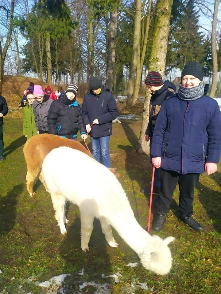 Alpaki u dzieci ze szkół specjalnych w Adamowie w gminie Promna. Była zabawa i rehabilitacja