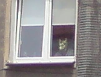"""""""Człowiek-wilk"""" obserwował procesję z okna mieszkania."""