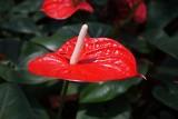 Trujące kwiaty domowe: uważaj na dzieci
