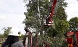Konary drzewa opierały się o dach. Interweniowali strażacy (zdjęcia)