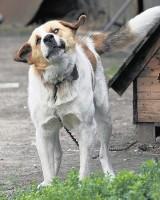 Platforma Obywatelska chce spuścić psy z łańcuchów...