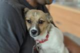 Pies, który spadł z trzeciego piętra w Wejherowie, wraca do zdrowia. Sprawę bada policja. Zdjęcia