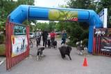 Pieski bieg. I Mistrzostwa Ziemi Łódzkiej w dogtrekkingu (wideo)