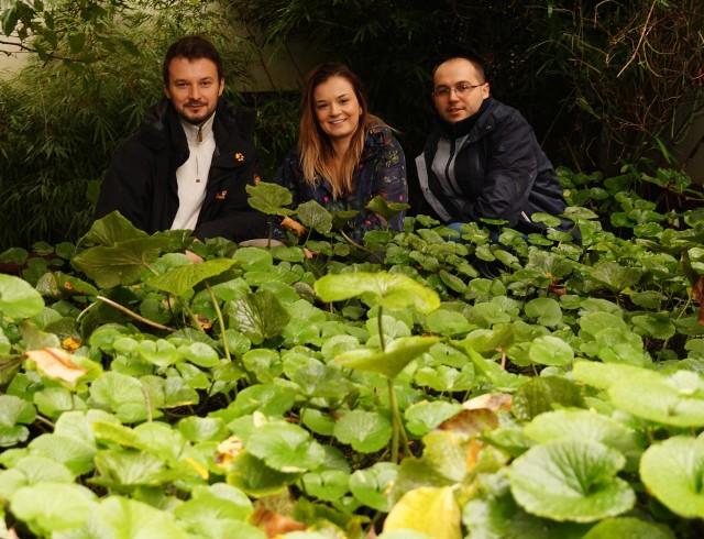 Wasabi Farm Poland to firma rodzinna, która prowadzi jedyną w Europie kontynentalnej uprawę tej egzotycznej rośliny.