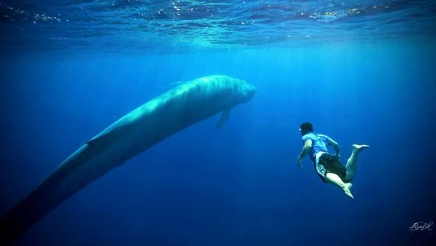 Gra Niebieski wieloryb; 50 zadań na 50 dni; Niebieski wieloryb - zadania, Niebieski wieloryb – zasady albo Blue Whale Challange – śmiertelna gra z Rosji dotarła do Polski. Niektórzy uważają, że to oszustwo, ale są już pierwsze przypadki okaleczeń w naszym kraju. Na co trzeba zwrócić uwagę?