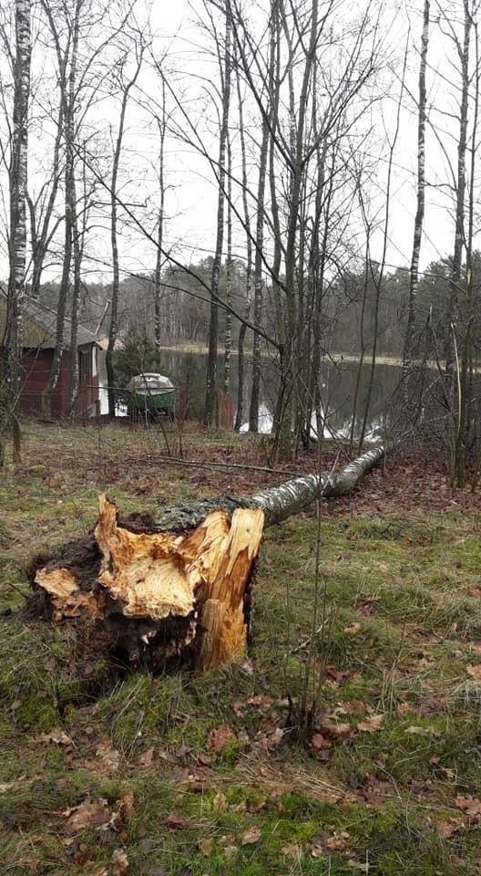 Od kilku dni w naszym regionie mocno wieje. Strażacy z OSP w Żydowie interweniowali m.in. w sprawie zerwanej linii energetycznej niedaleko Kawcza (gm. Miastko). Z kolei w Dyminie (gm. Koczała) podmuchy wiatru przewróciły kilka drzew.