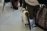 """Kocia Kawiarnia """"Biały Kot"""" w Gdyni. Zakaz wstępu z małymi dziećmi [ZDJĘCIA]"""