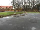 Wrocław: Stado dzikich świń w Parku Złotnickim (ZDJĘCIA)