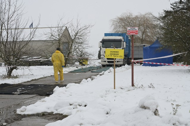 Ognisko ptasiej grypy w Linowie (gm. Świecie nad Osą) wykryto w pierwszym tygodniu stycznia.