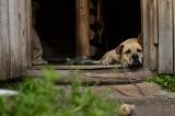 Koniec z trzymaniem psów na łańcuchach? Posłowie przygotowują nowelizację ustawy
