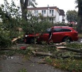 Wypadek we Władysławowie 14.10.2020. Drzewo przygniotło jadący samochód. Jedna osoba ranna. Zdjęcia