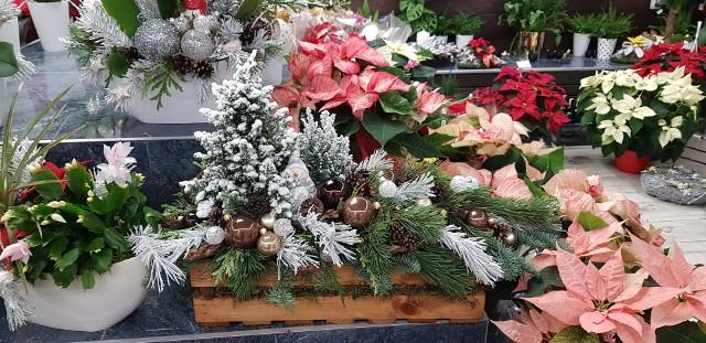 Jaka choinka? Ośnieżona! Taka mała w stroiku świątecznym też.