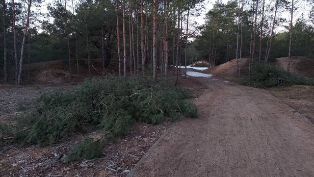 Jak informuje nasza Czytelniczka w parku na Jarze wycinane bądź przycinane są nie tylko suche drzewa, ale również zdrowe sosny