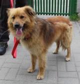 Dwa przywiązane psy przy kracie schroniska dla bezdomnych zwierząt przy ulicy Marmurowej w Łodzi. Porzucone w nocy