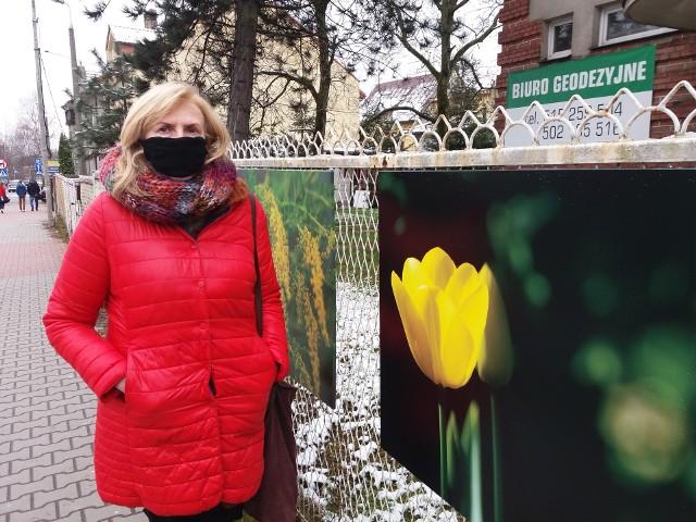Zdjęcia wiszą na ogrodzeniu posesji przy ul. Słowackiego (między ulicami Matejki a Piłsudskiego)