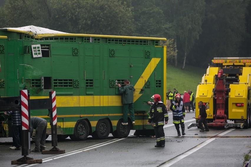 Ciężarówka przewożąca bydło przewróciła się w środę rano (8 maja). Ucierpiały zwierzęta.CZYTAJ DALEJ NA NASTĘPNYM SLAJDZIE