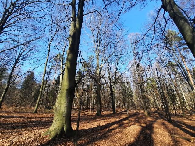 Lasy Murckowskie w KatowicachZobacz kolejne zdjęcia. Przesuwaj zdjęcia w prawo - naciśnij strzałkę lub przycisk NASTĘPNE