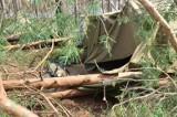Tragedia w Suszku na Pomorzu. ZHR nie zrezygnuje z obozów w lasach
