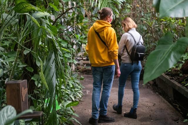 Po długim zamknięciu od 5 lutego Palmiarnia Poznańska została otwarta we wszystkie dni tygodnia z wyjątkiem poniedziałków. Miłośnicy tropików i wyjątkowych roślin mogą  tutaj zaglądać od wtorku do niedzieli
